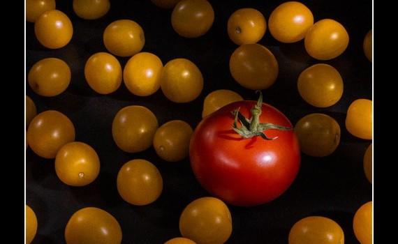 Not The Same Tomato