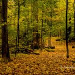 Monarch Woods